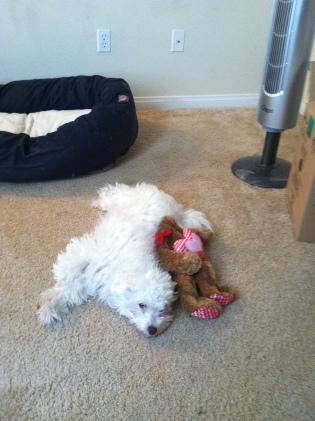 Charlie love bear