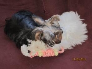 Ren & Charlie Snuggles
