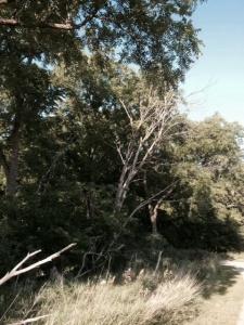 I like dead trees no idea why