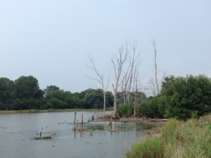 trees in the wetlands